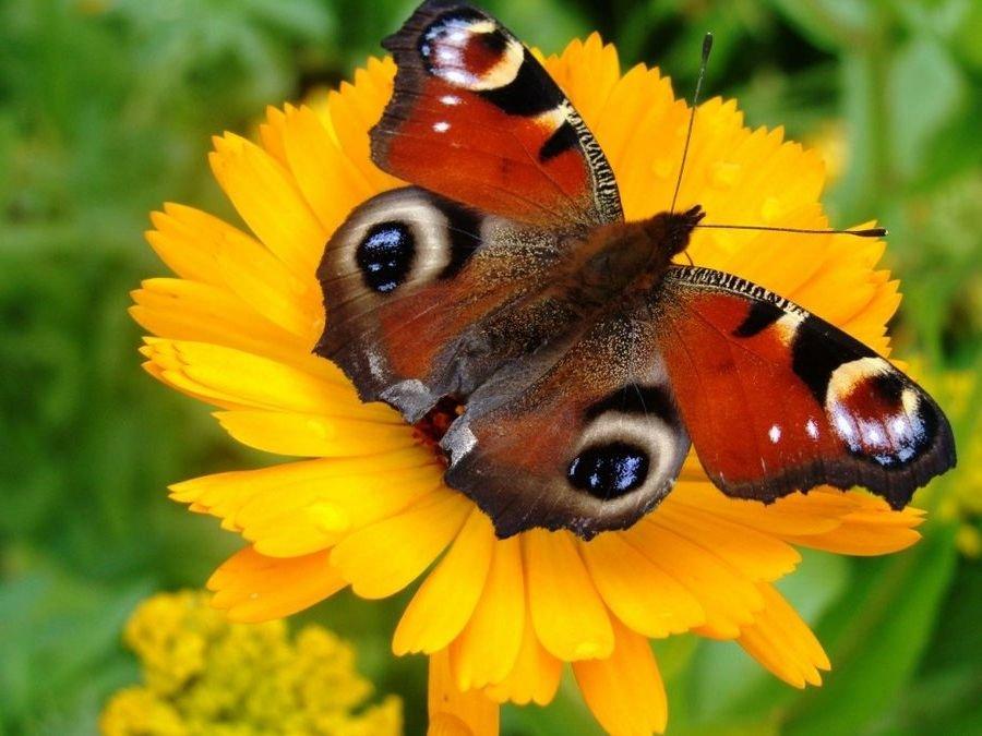 Картинка бабочка для детей фото