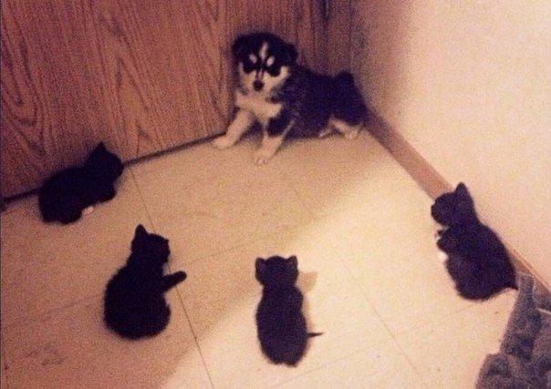 Кажется, влип#коты_бандиты #собака_и_кошка #собака_в_углу #кот_и_собака #кошка_с_собакой #испуганная_собака #cute_puppy