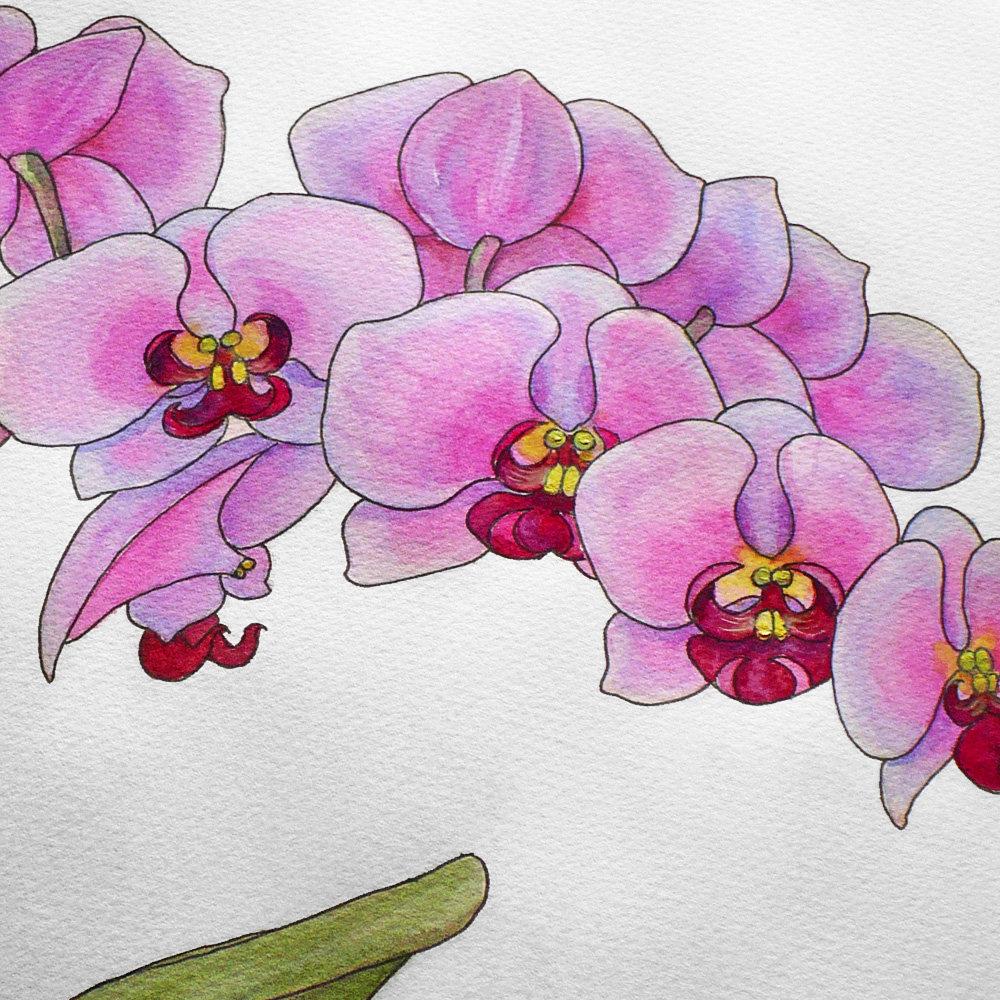 Рисуем орхидеи картинки