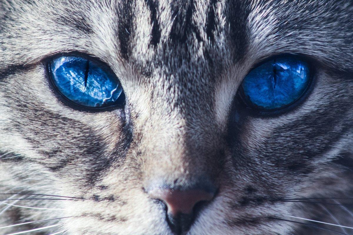 картинка про кота с глазами посетит тех