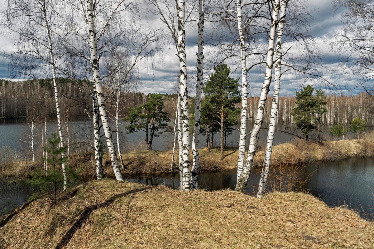 действия фото весенних лесных пейзажей репортажная фотография москве