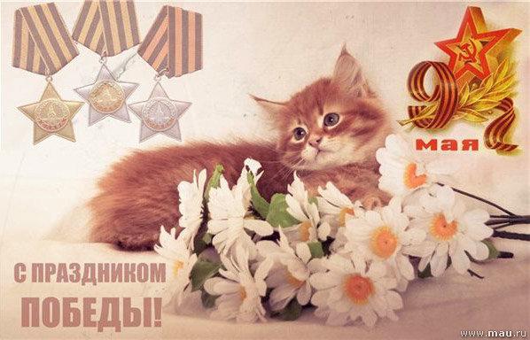 Анимация коты с днем победы, открытка спокойной