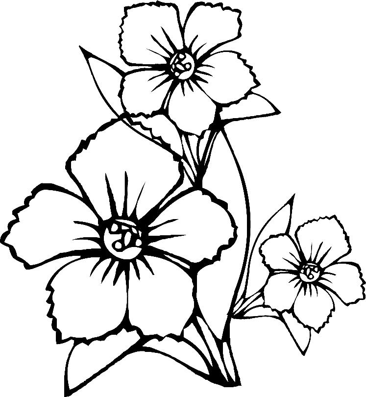 Картинки с цветами для детей распечатать