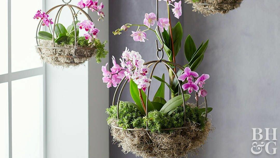выращивание орхидеи дома в кашпо