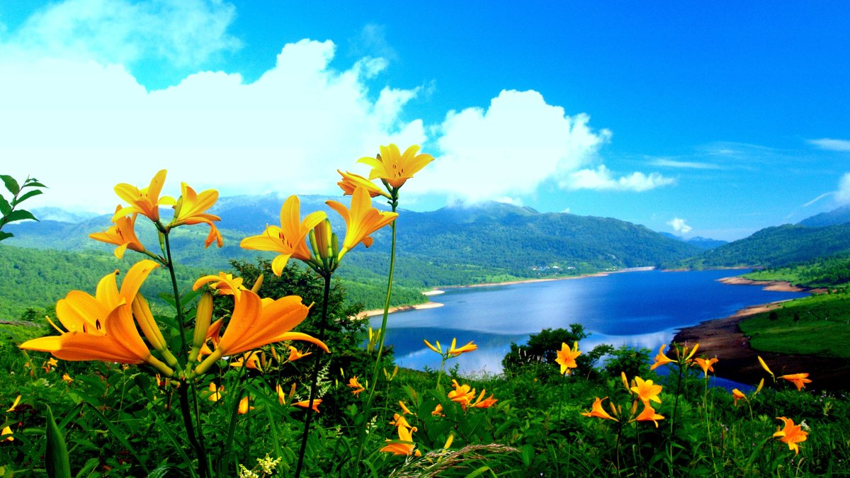 которой красивые картинки лето природа на рабочий стол внутрь цветка