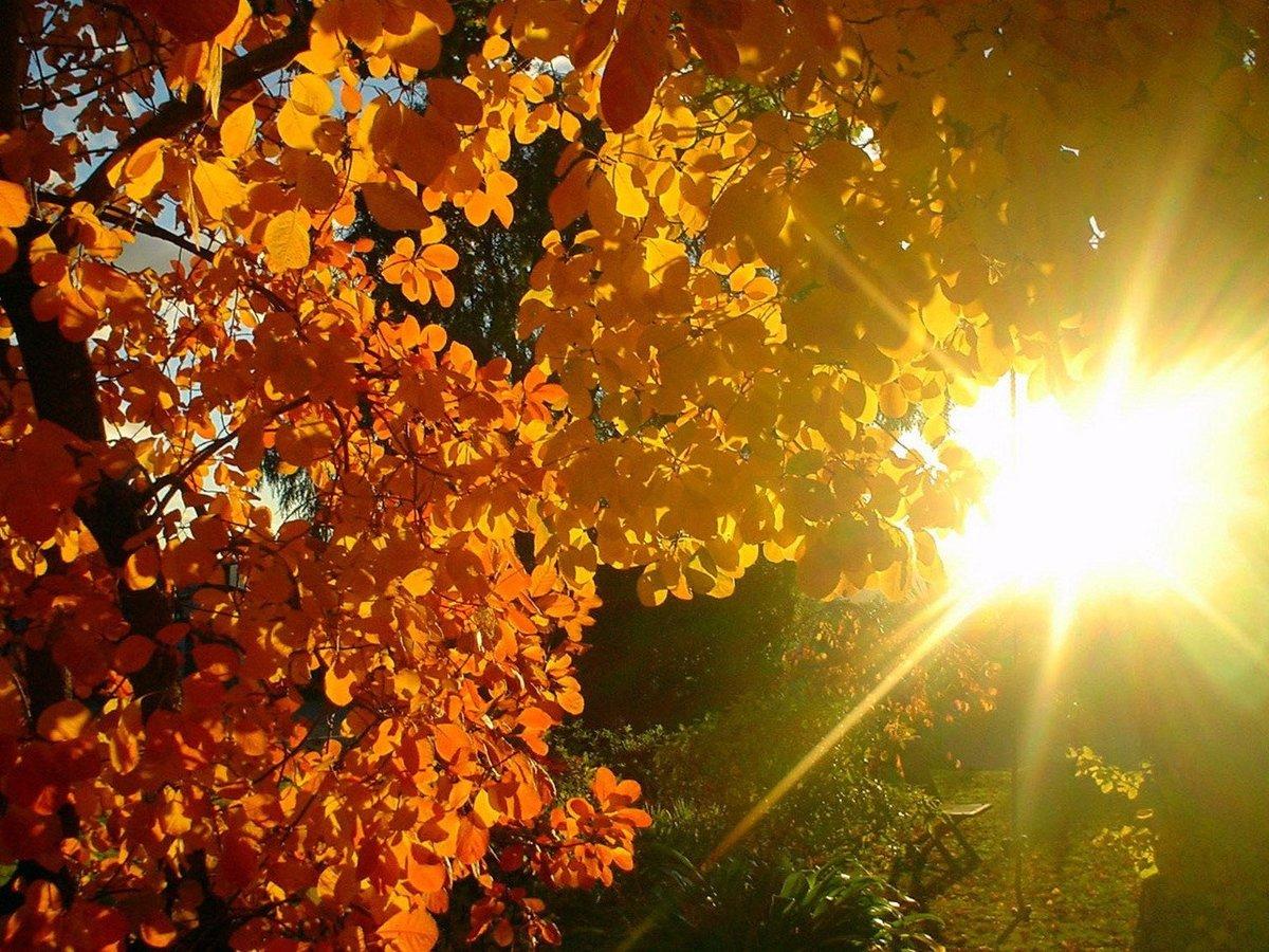 Картинки с осенней погодой доброе утро