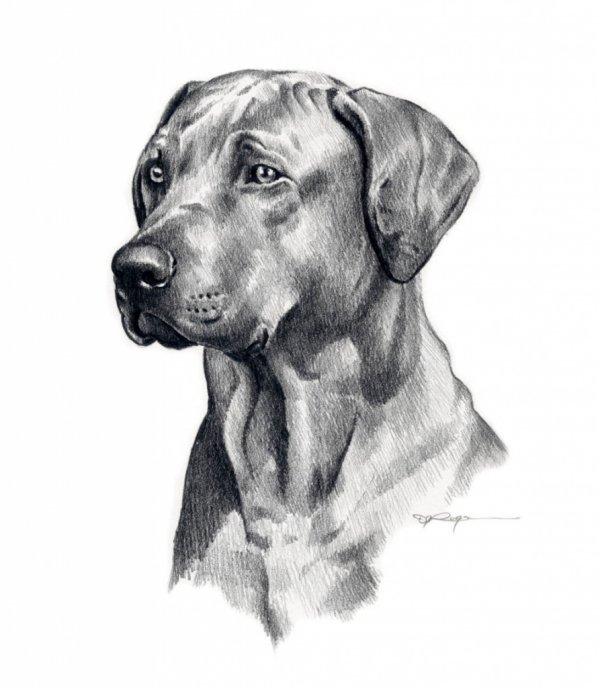 наши картинки рисования собак лайки