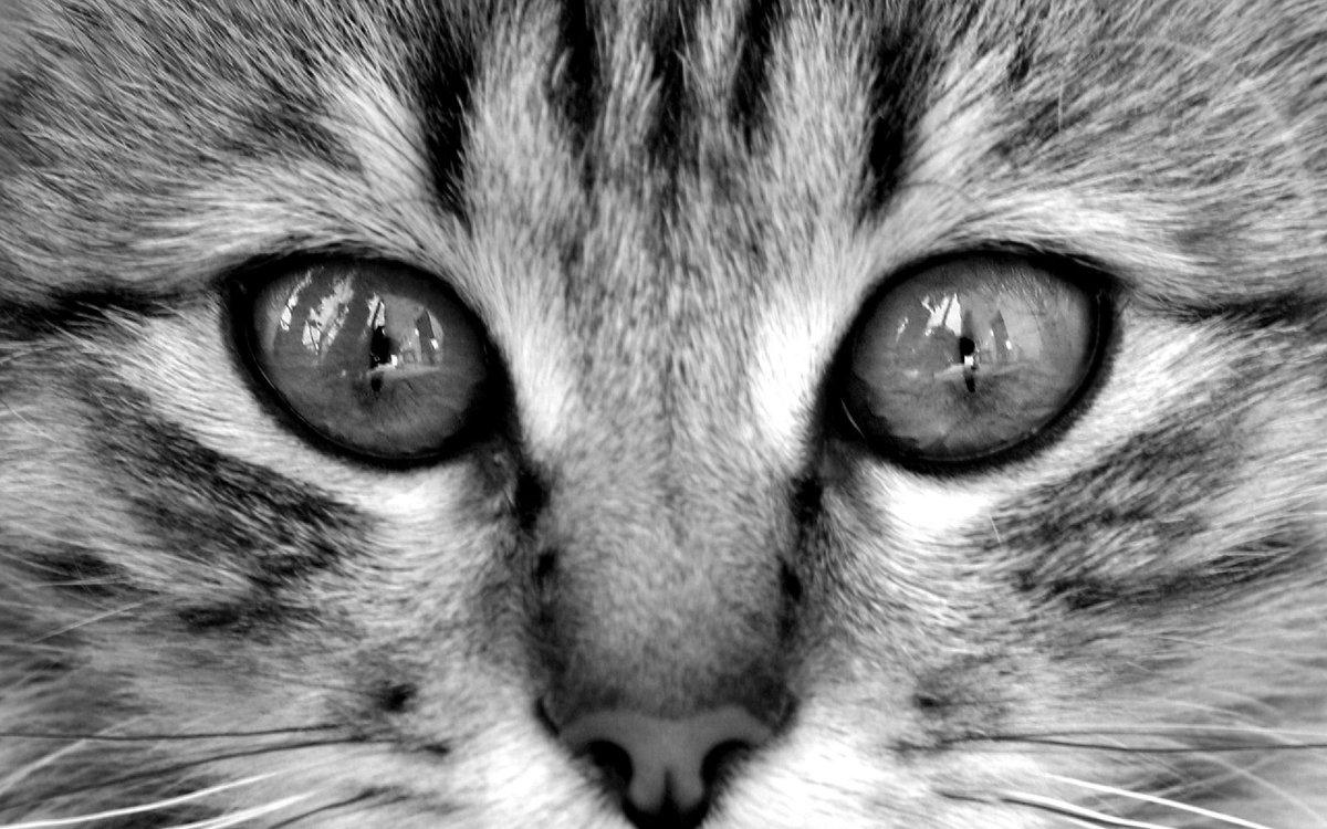 Кот глаза картинки