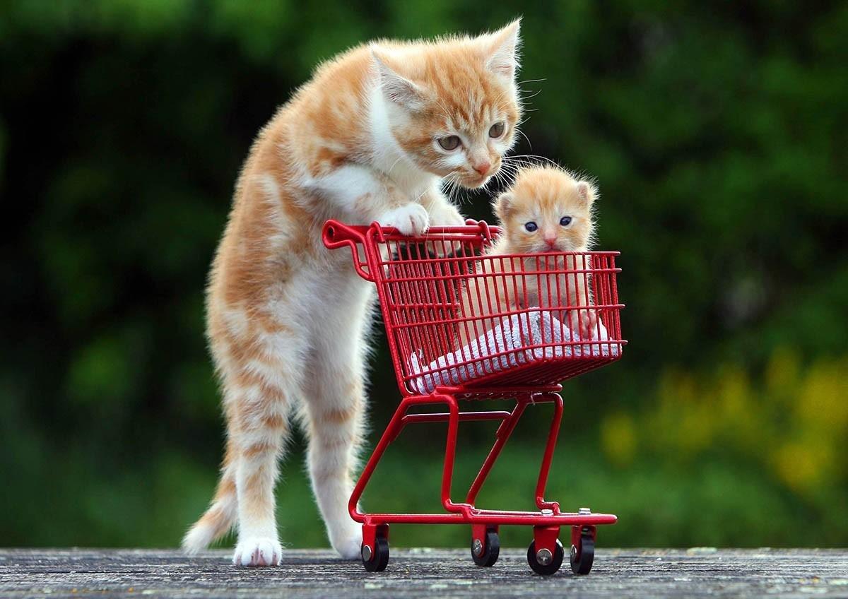 Грустная, смешные картинки про кота и котенка