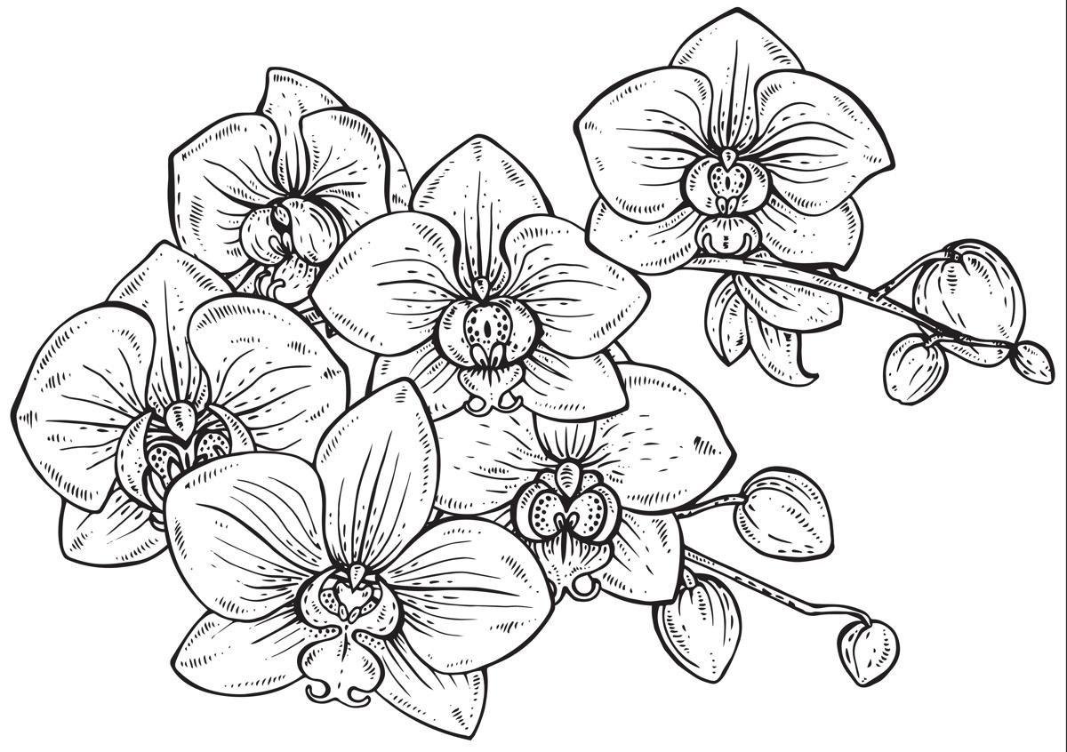 Eitelkeit Orchideen Tattoo Beste Wahl 100+ Blue Orchid Meaning Ideen Entw