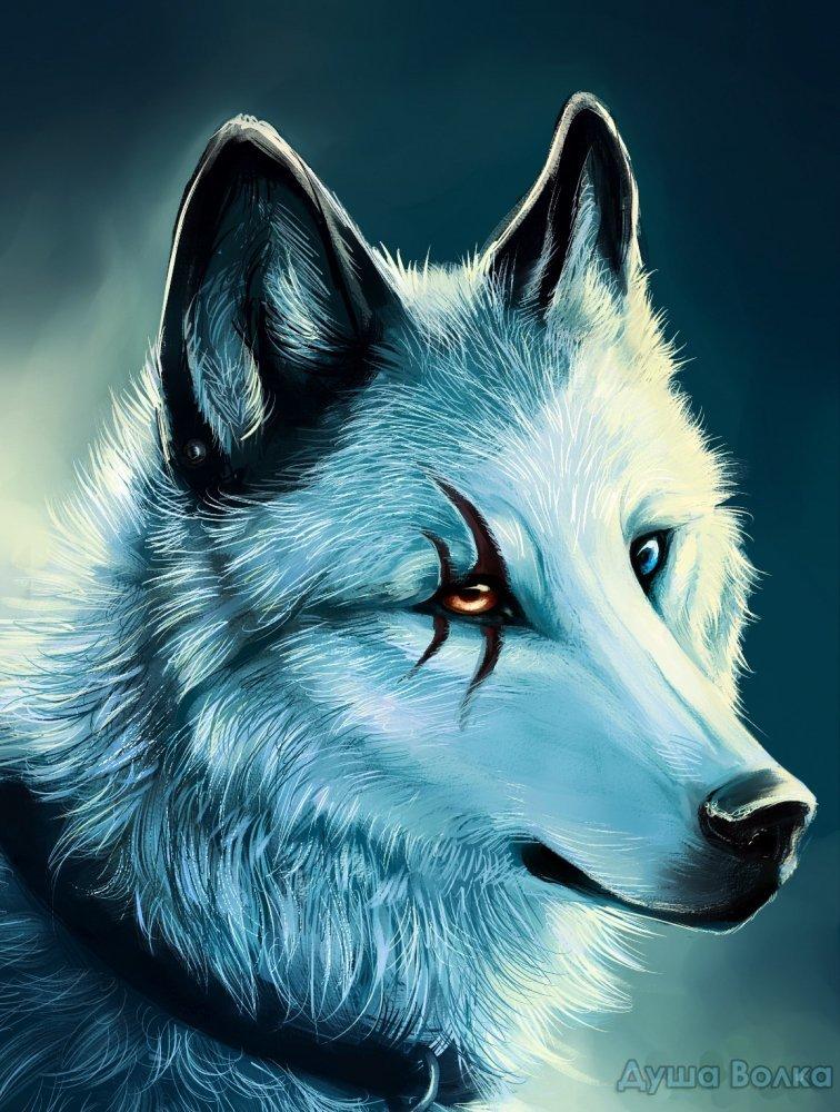 Рисунки волков прикольные, семья рисунок открытки