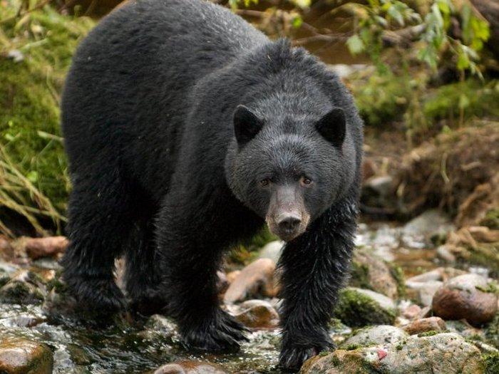 заказать фотографии животных северной америки лестниц