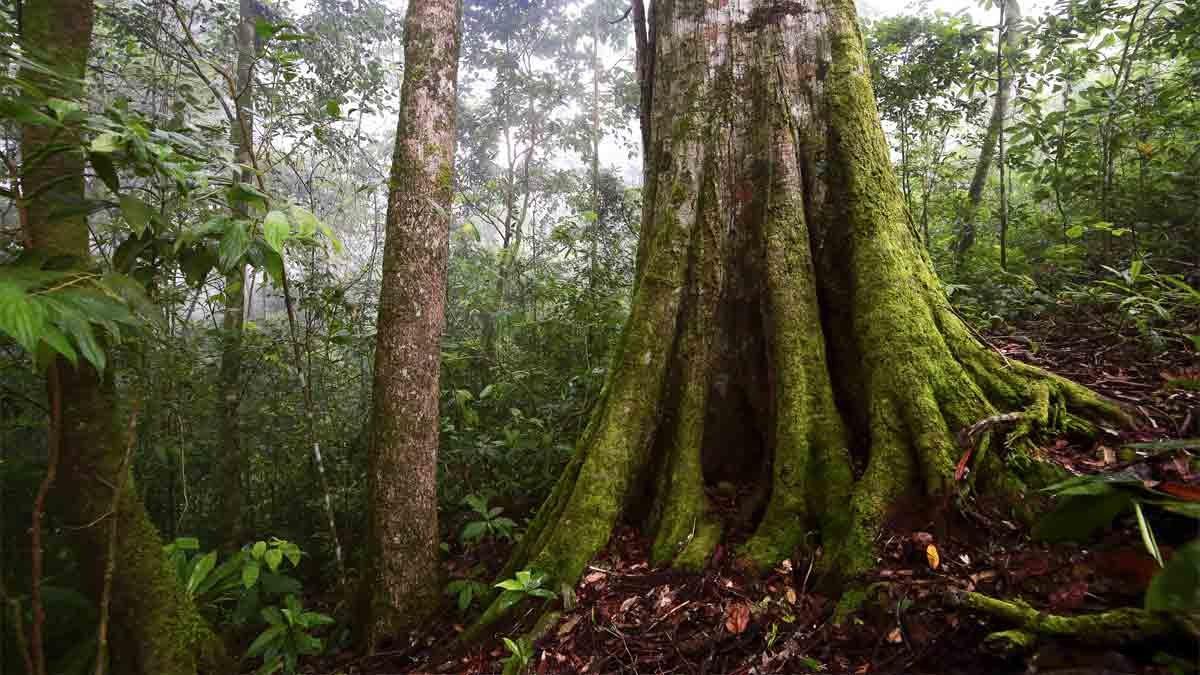 картинка тропического дерева