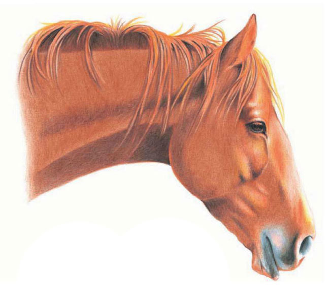 диагностику картинки голов коней половых губах появляются