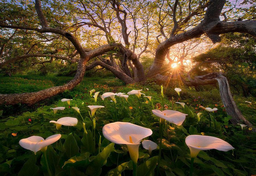 весна фото интересные