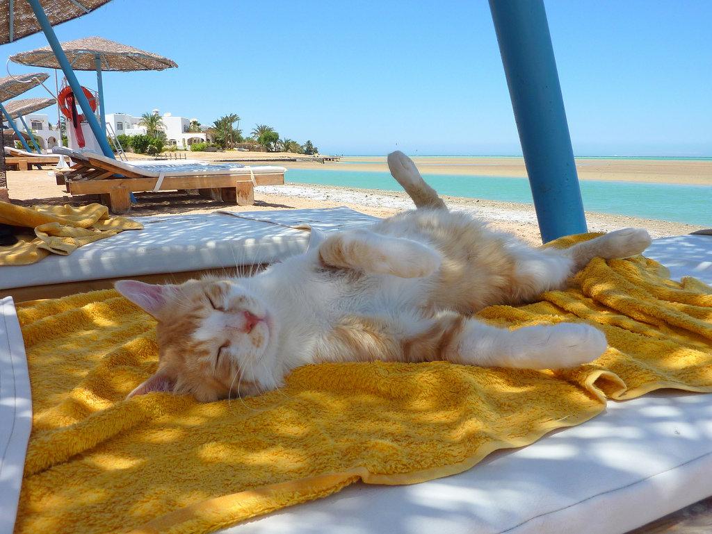 Про щенка, прикольные картинки про отдыхающих на море