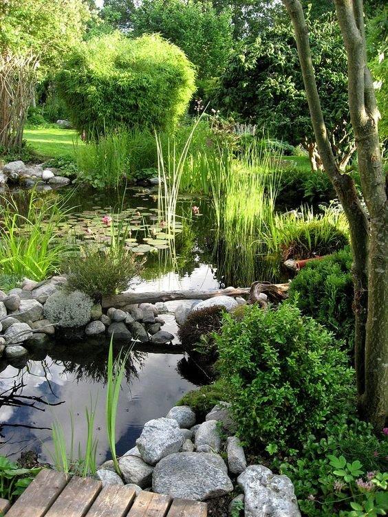 свои фотографии растения возле пруда фото силой увез