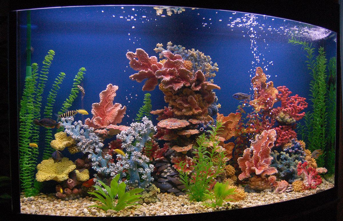 Как оформить аквариум своими руками фото красноярске пройдет