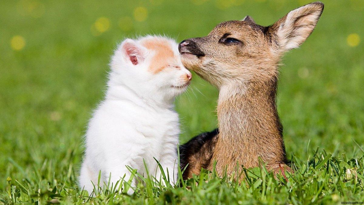 Картинки любовь животных прикольные, вставить текст открытку