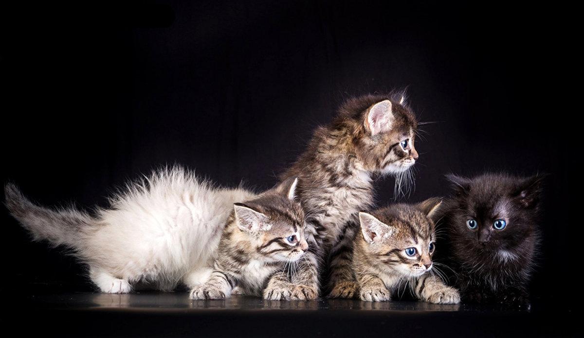Картинки смешных котят и котов, открытки цена