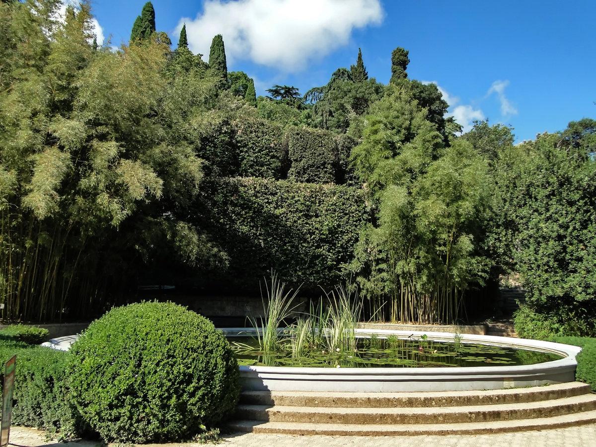 никитинский ботанический сад в ялте фото собрали этом