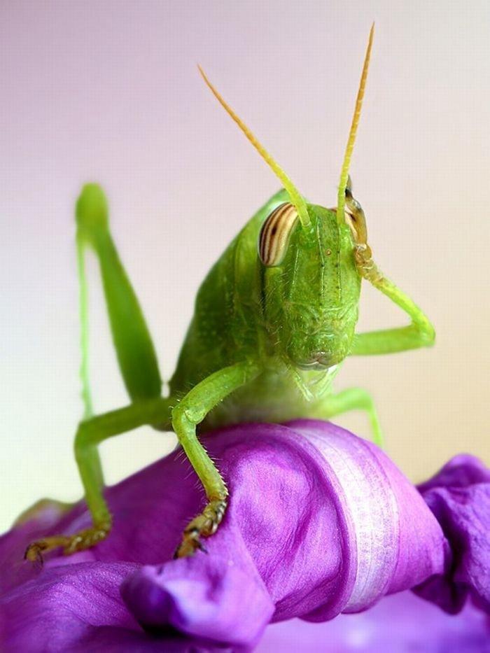 Тему, приколы картинки с насекомыми