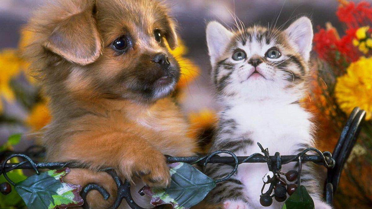 обладает картинки на рабочий стол с собачками и котятами то