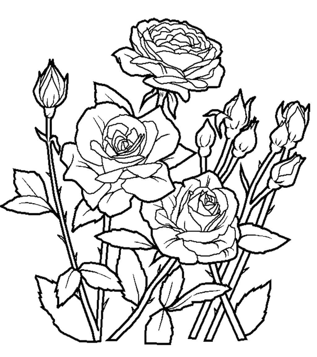 демонстрации цветы картинки карандашом распечатать погоде