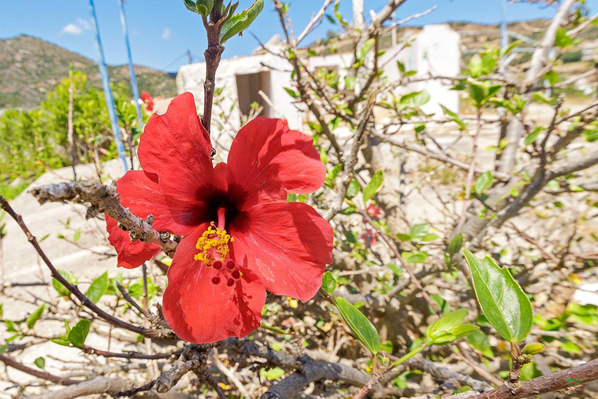 чем нужно цветы на острове дени фото можно носить чем