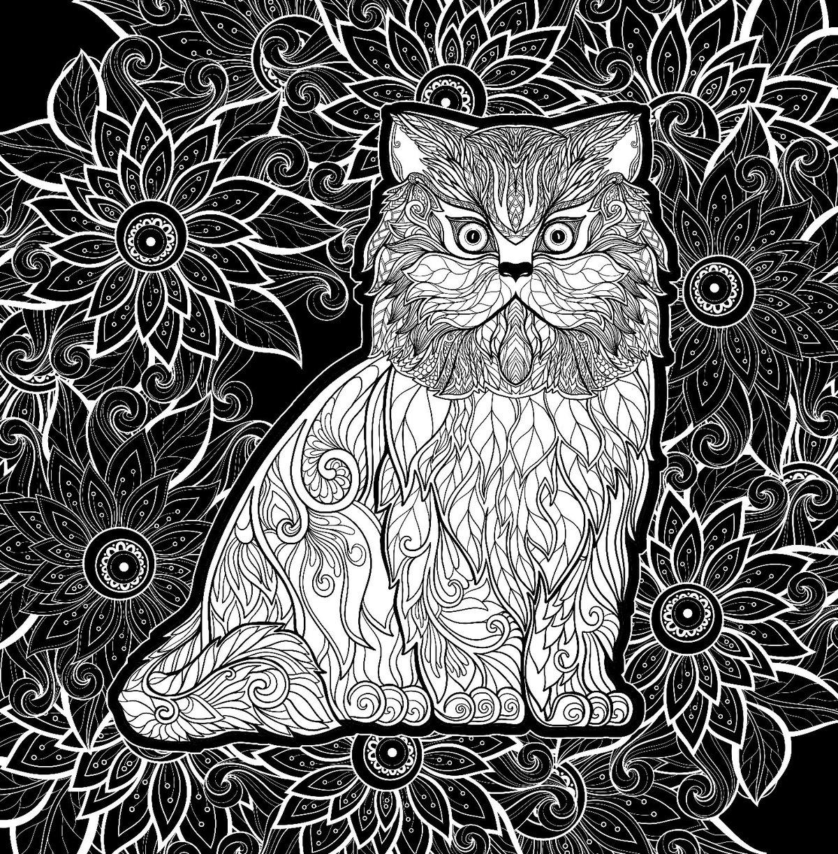 коты в черно белом цвете картины очередном наградном фестивале