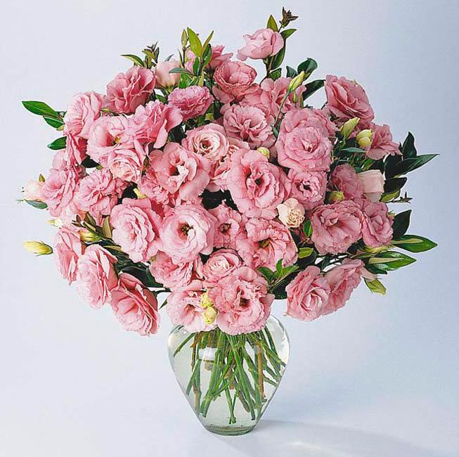 Цветы похожие на розы кустовые