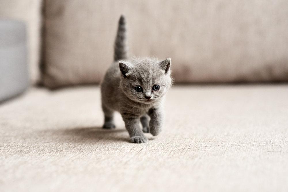 Самый маленький кот картинки