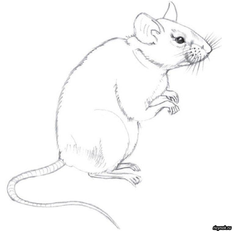 Мышь картинка карандашом