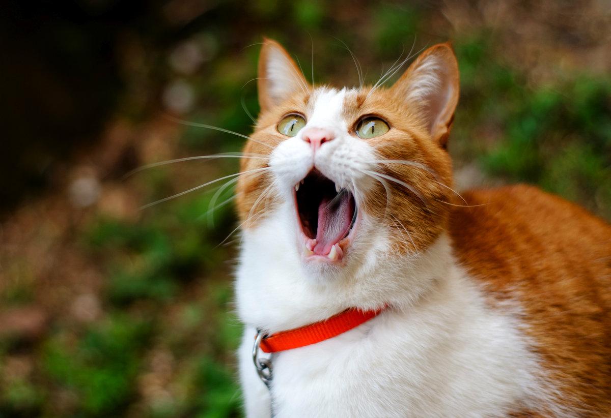 Картинка смешной кошки, надписью ваалейкум салам