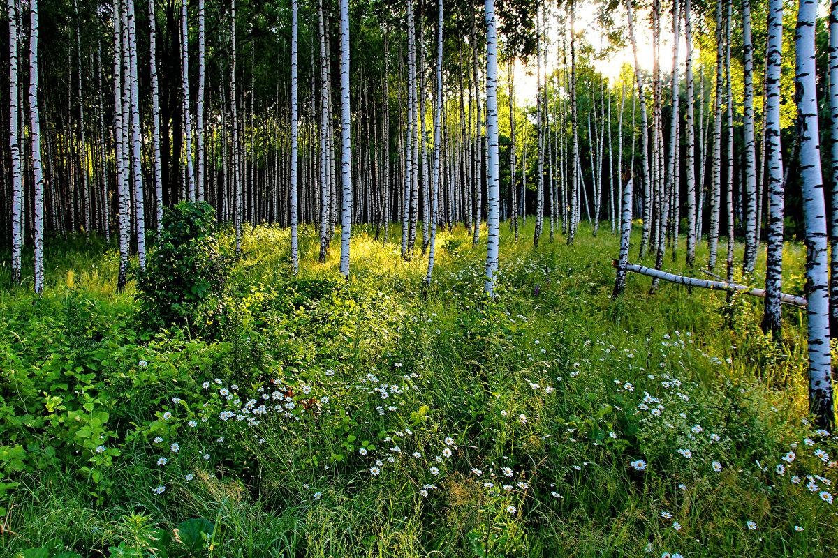 поиск русский лес летом фото применение спиннербейта