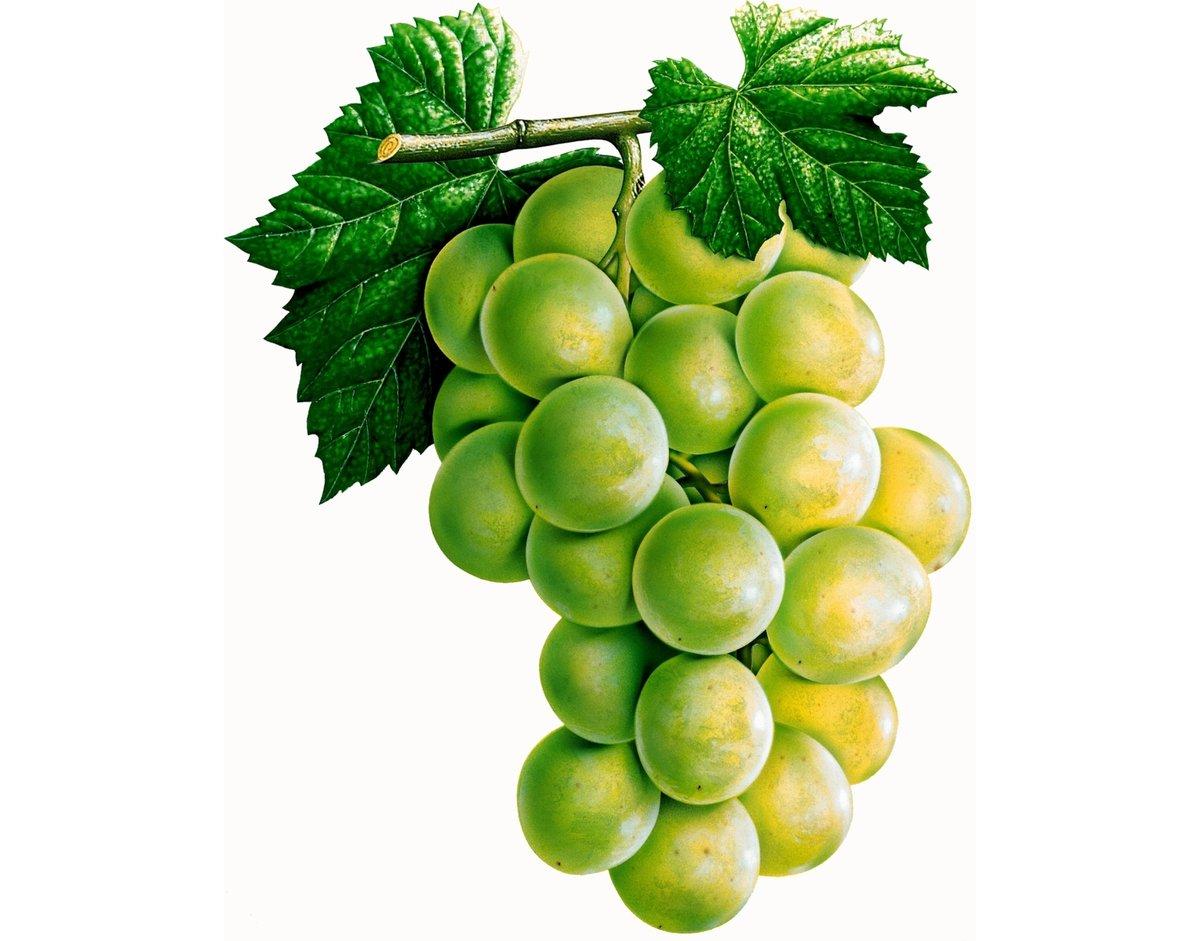 Картинка детская одна виноградинка