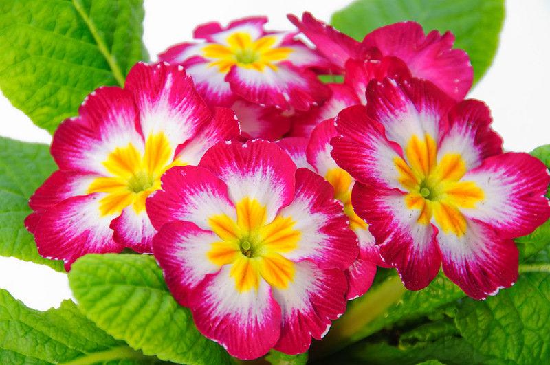 незнакомые виды цветов