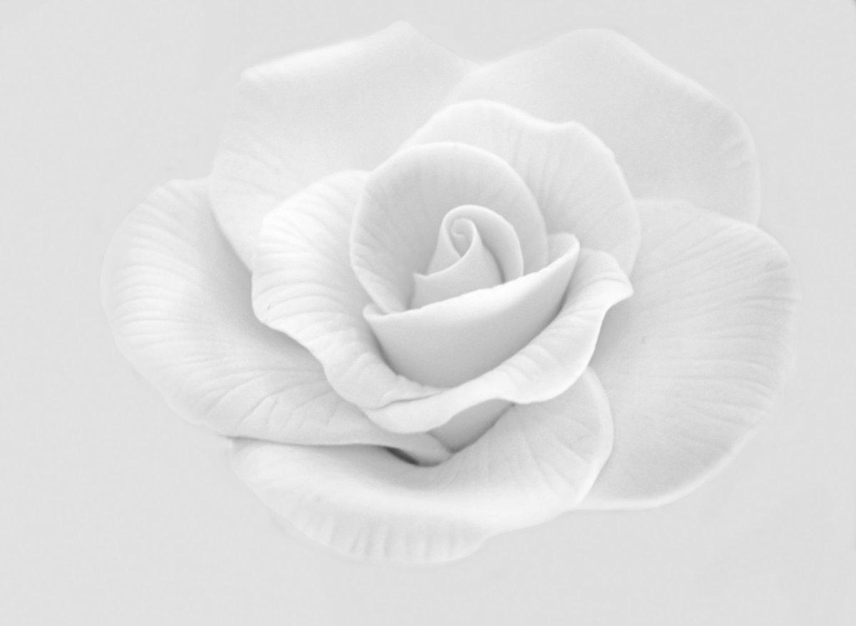 Для, цветы белые картинки для фотошопа