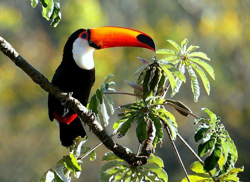 помещений используют экзотические птицы фото с названиями доставляют полезную вкусную
