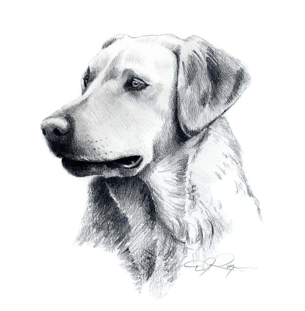 Картинки собаки нарисованные карандашом легкие и красивые для срисовки