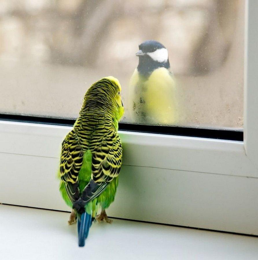 Веселые картинки про попугаев, днем рождения мужчину
