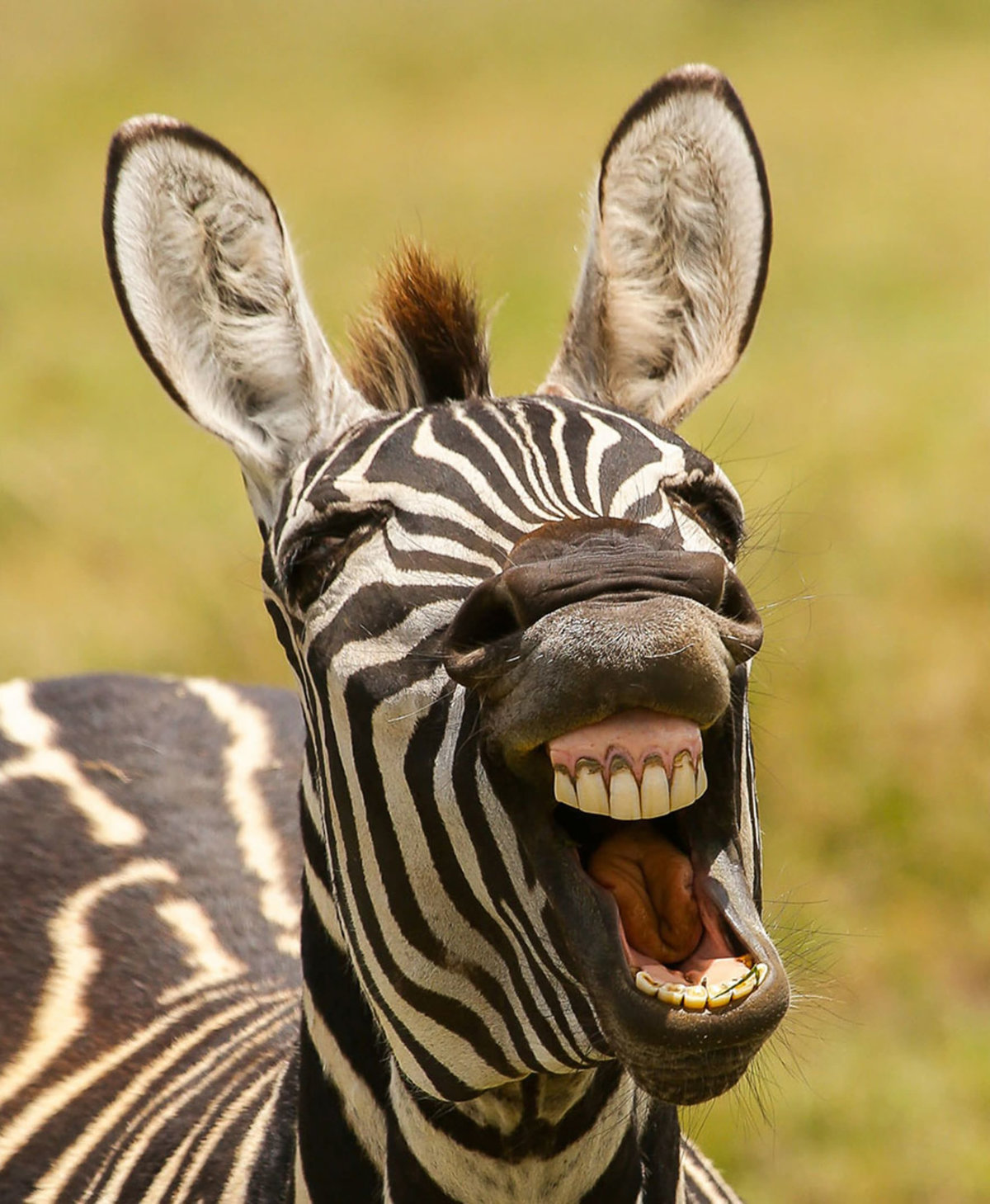Александр открытки, смешные фото и картинки животных
