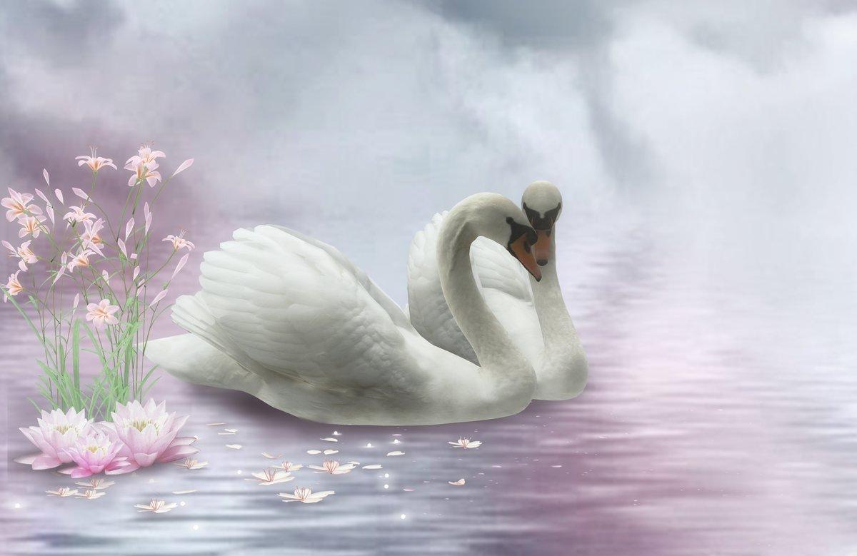 Картинка, открытки красивые с лебедями