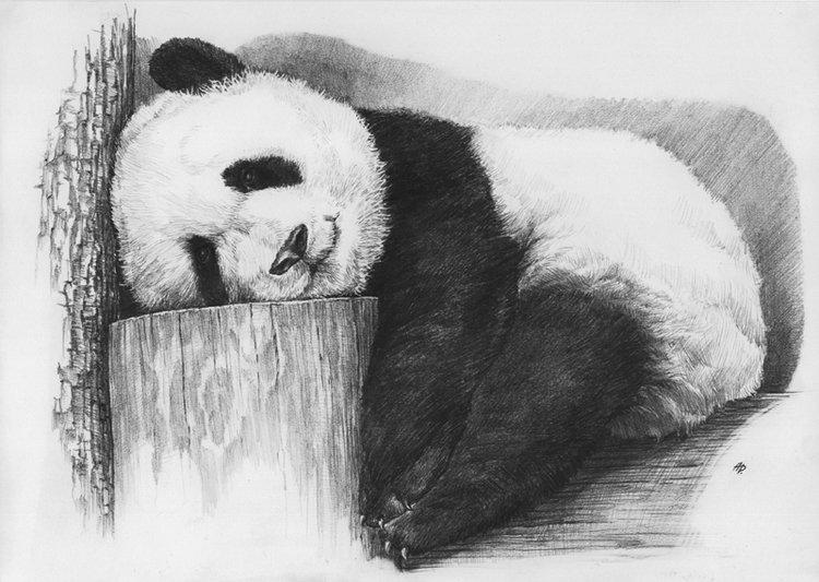 Панды картинки нарисованные карандашом, своими руками