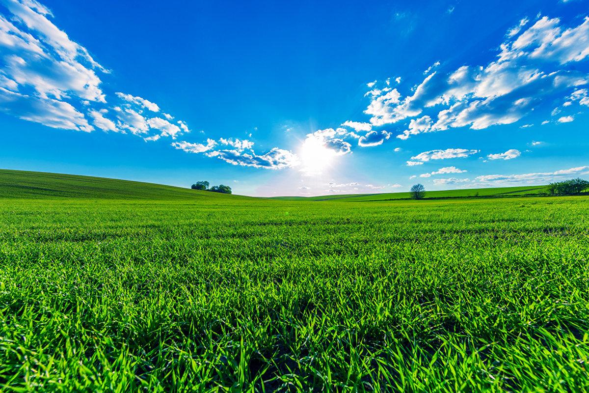 чистое небо и луг картинки р-н пролетарский радостью