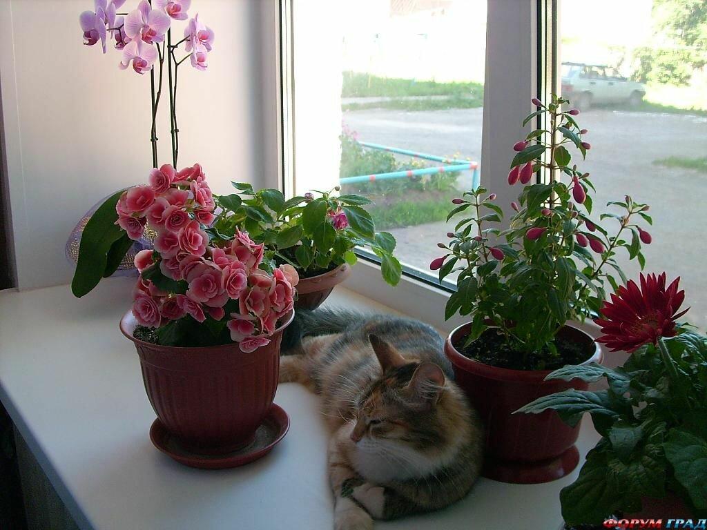 комнатные растения оздоравливают жилье