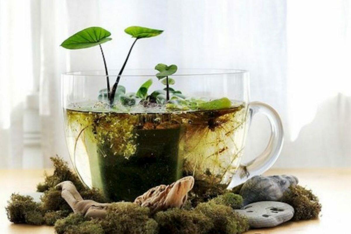 Как сделать комнатный прудик, выращивание водных растений в комнатных условиях
