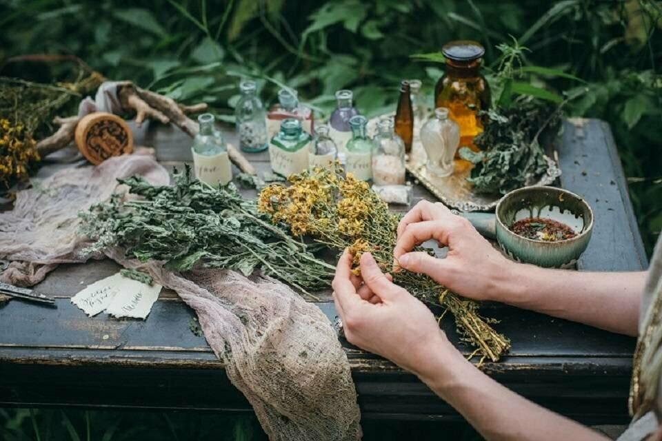 самые полезные лекарственные растения