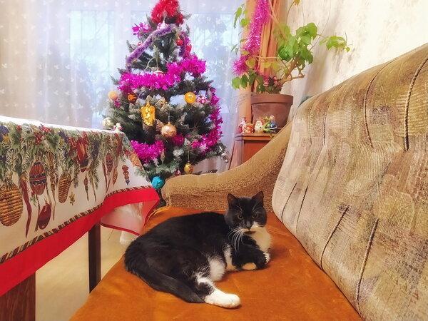 Новый Год! Рождество! Стол почему пустой, спрашивается?