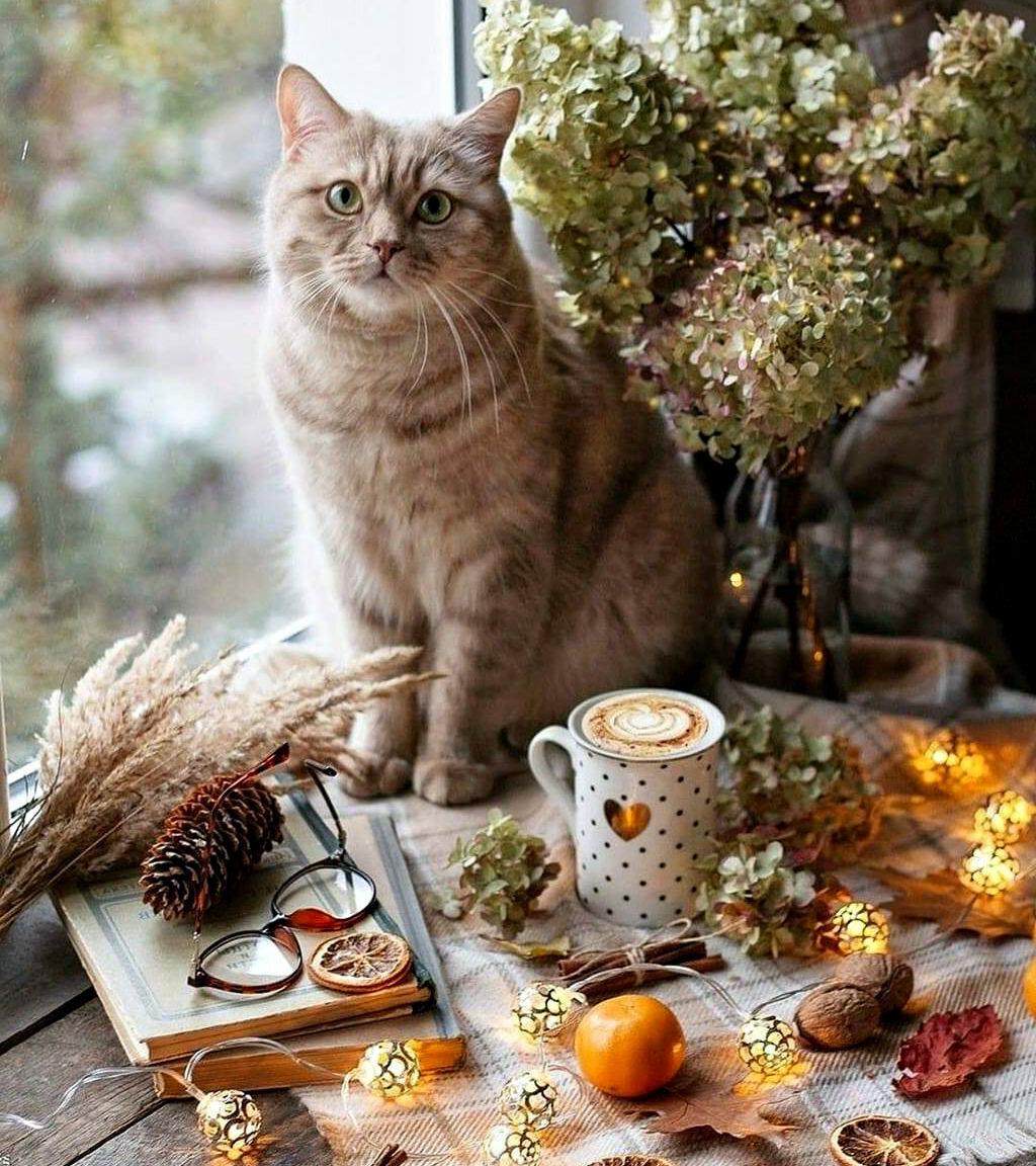 котик - счастье в доме